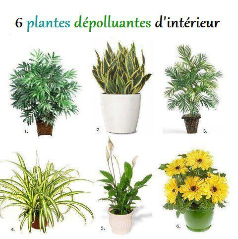 Plantes vertes et d pollution de l 39 air for Plantes vertes